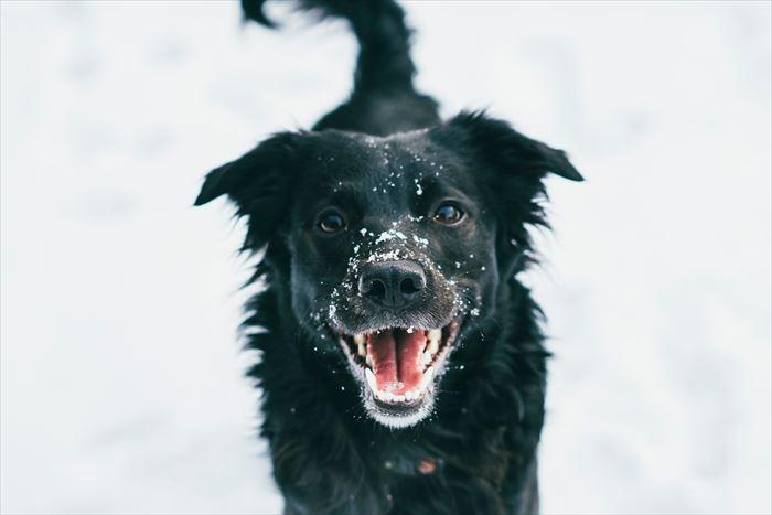 犬が吠える原因とは?犬が吠える5つの原因としつけ方法を紹介