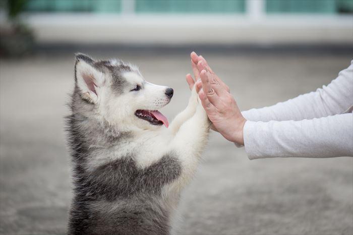 犬を褒めるしつけとは?犬をしつけるときの上手な褒め方を紹介