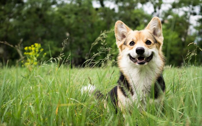 犬のトイレトレーニングの方法とポイントを紹介
